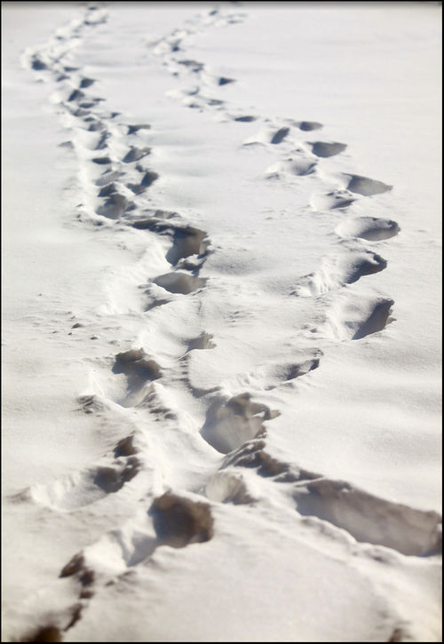 Footprints border